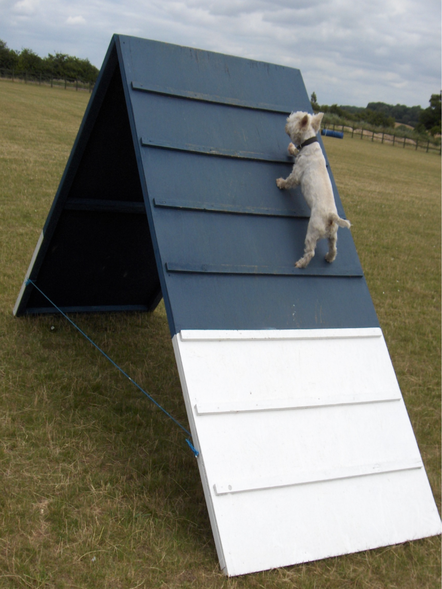 Level 1 Agility Course***FULLY BOOKED***